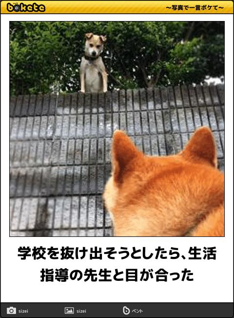 吹いたら負け 11月も笑いで始められる犬の傑作ボケて16選 犬のおもしろ写真 犬 おもしろ猫画像