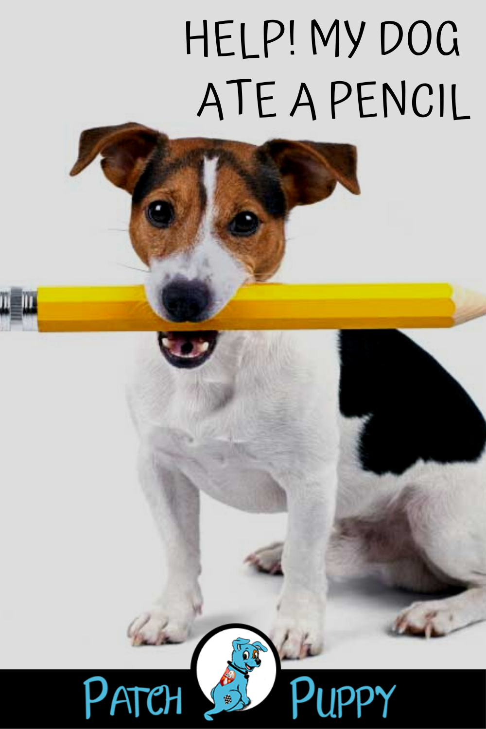 Dog Ate Pencil : pencil, Help!, Pencil, PatchPuppy.com, Eating,, Health,