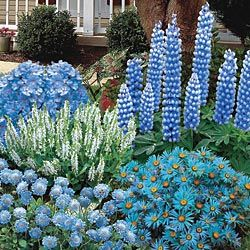 Prepackaged blue flower garden...Love the height distribution