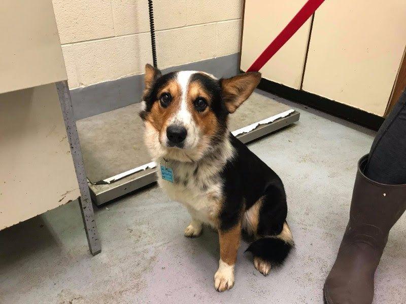 Adopt Jack Daniels Whiskey on Petfinder Pets, dog