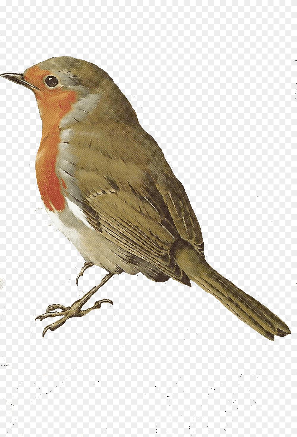 Free Bird Png Bird Png 999 1469 Png Download Free Transparent Background Free Bird Png Png Download Birds Painting Bird Printables Vintage Birds