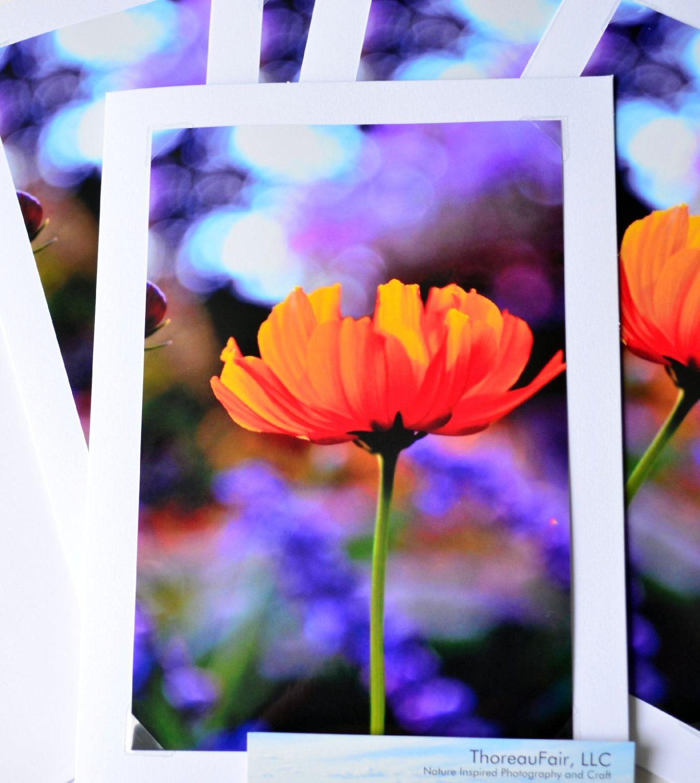 Orange Cosmos 5x7 Blank Greeting Card Fine Art Photograph Floral