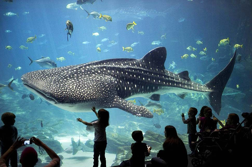 The 10 Best Aquariums In United States Famous Wonders Newport Or Is On List