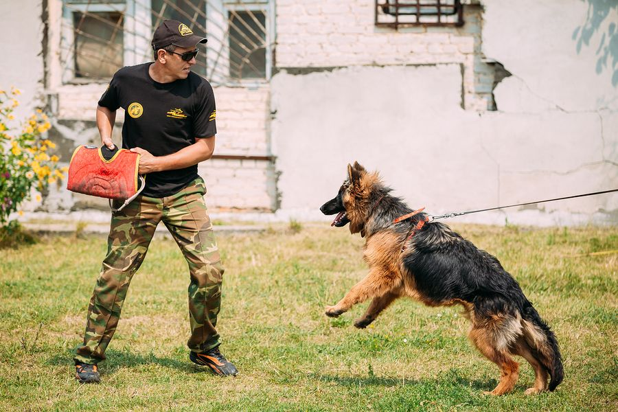 How To Train A Guard Dog To Attack A Threat Guard Dog Training