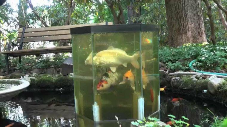 Estanques Diy De Diseno Minimalista Para Peces Koi Jardin - Estanques-peces