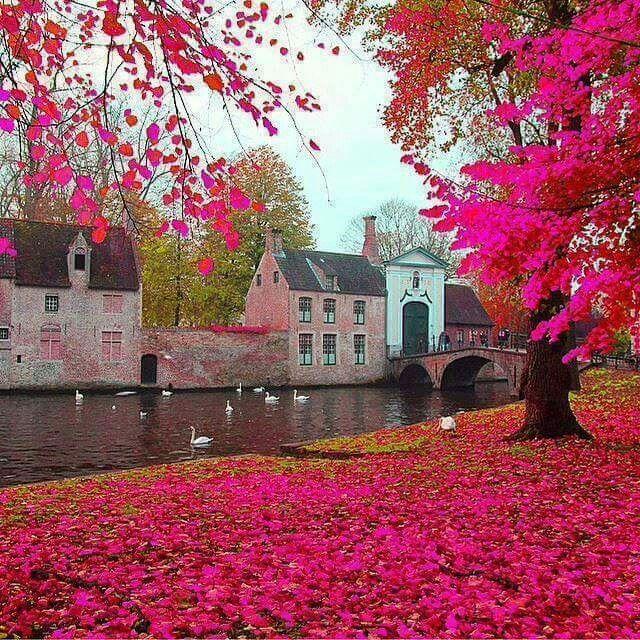 Pink fall in Brugge , Belgium