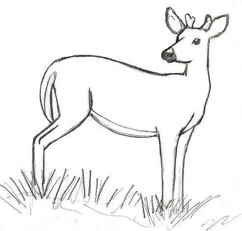 14+ Drawing deers ideas in 2021