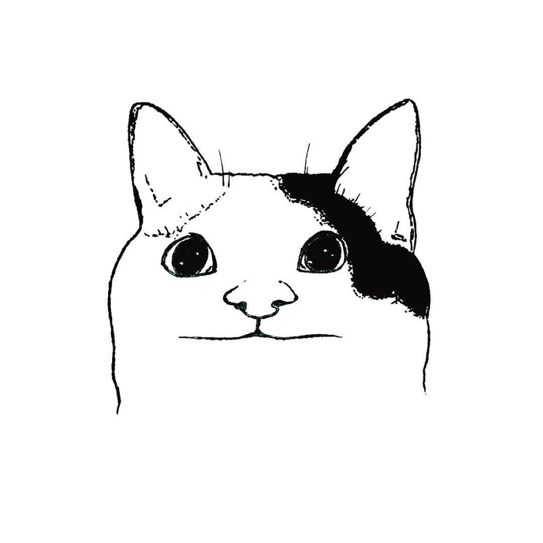 Cat Meme Face Drawing Cat Face Drawing Dog Face Drawing Dog Drawing