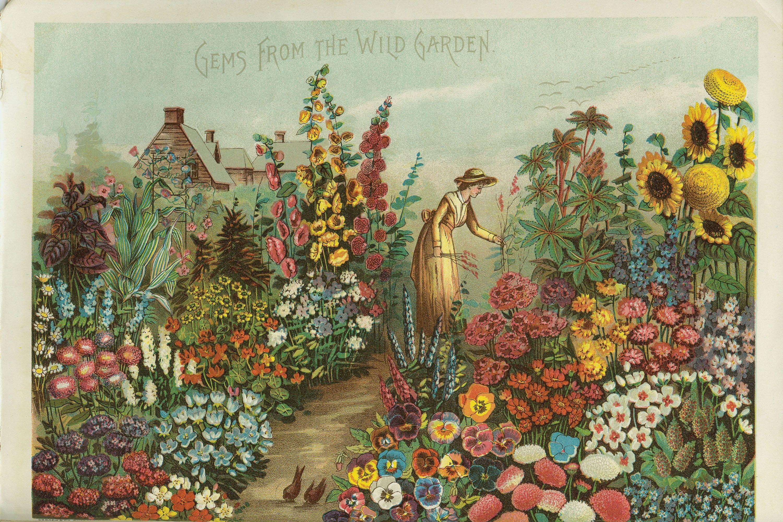 Gems from the Wild Garden (1888), postcard from the Rawson ...