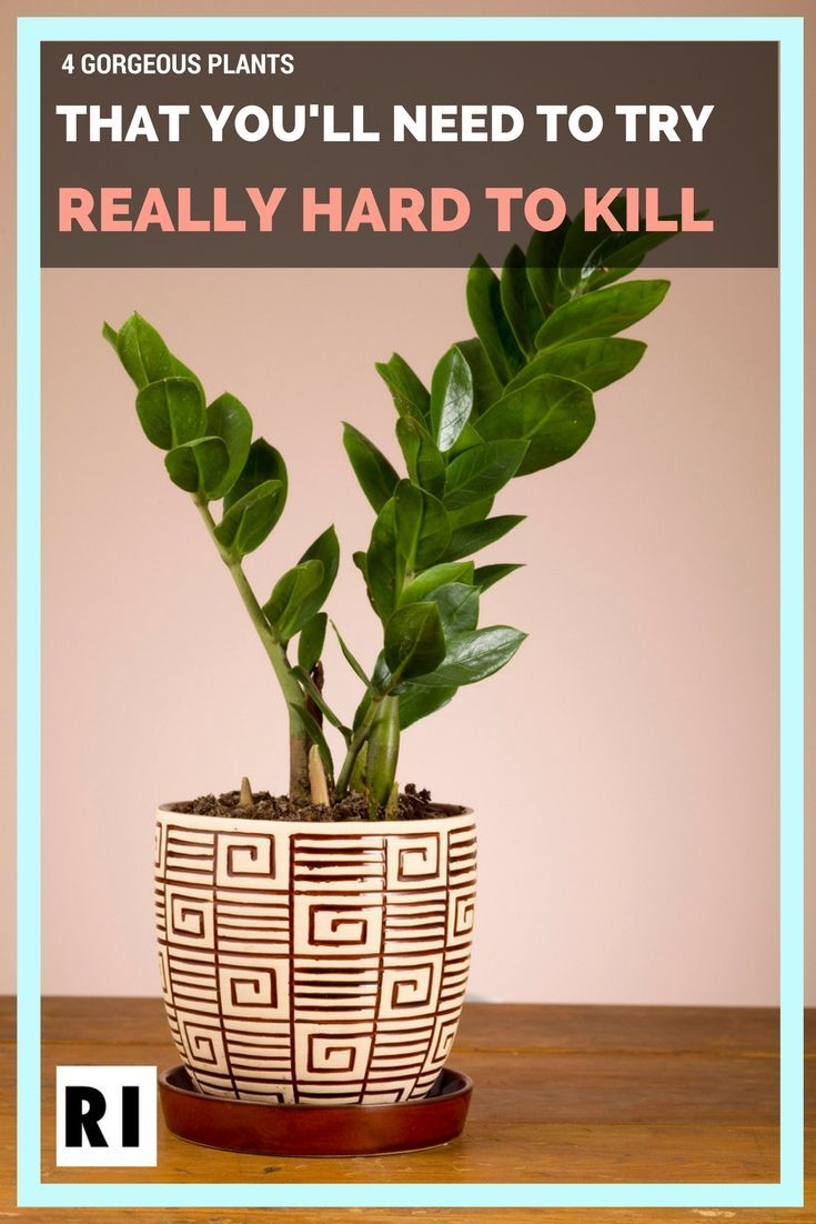 4 Gorgeous Plants That You\'ll Need to Try REALLY Hard to Kill ...