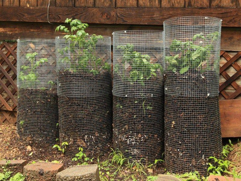 Rendements records avec la tour à pommes de terre ! Pommes de - Ou Trouver De La Terre De Jardin