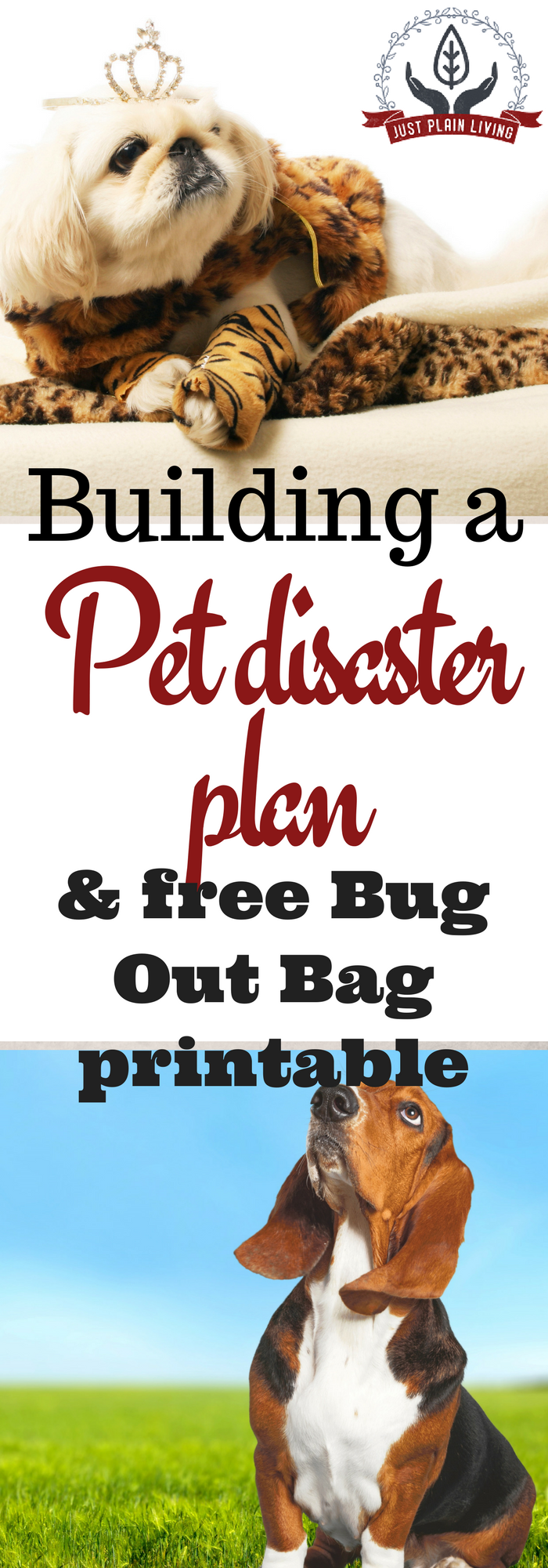 Pet Disaster Plan And Bug Out Bag Bug Out Bag Cheap Pet Insurance Pet Emergency