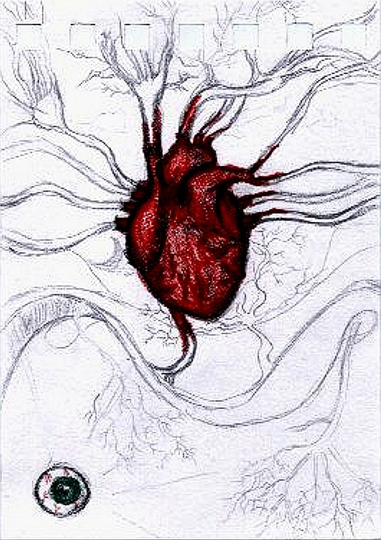 drawings of the human heart – citybeauty, Muscles