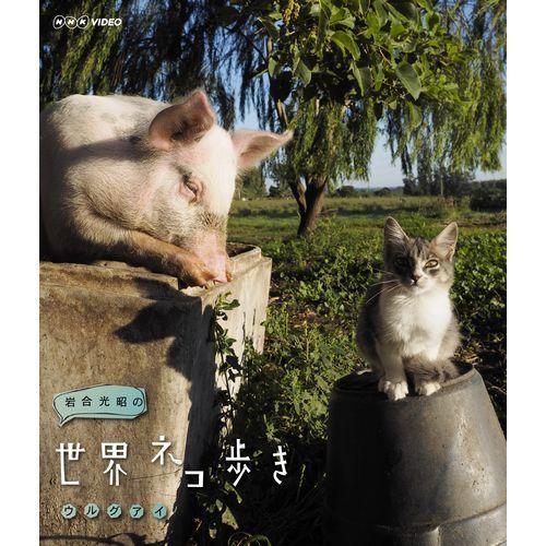 ネコ カメラマン db ネコカメラマンの評価⇒ねこ人魚とは違うのだよ!ザ