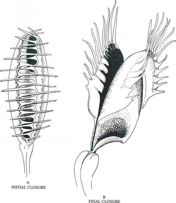 Image Result For Venus Fly Trap Diagram Fewd Pinterest Fly