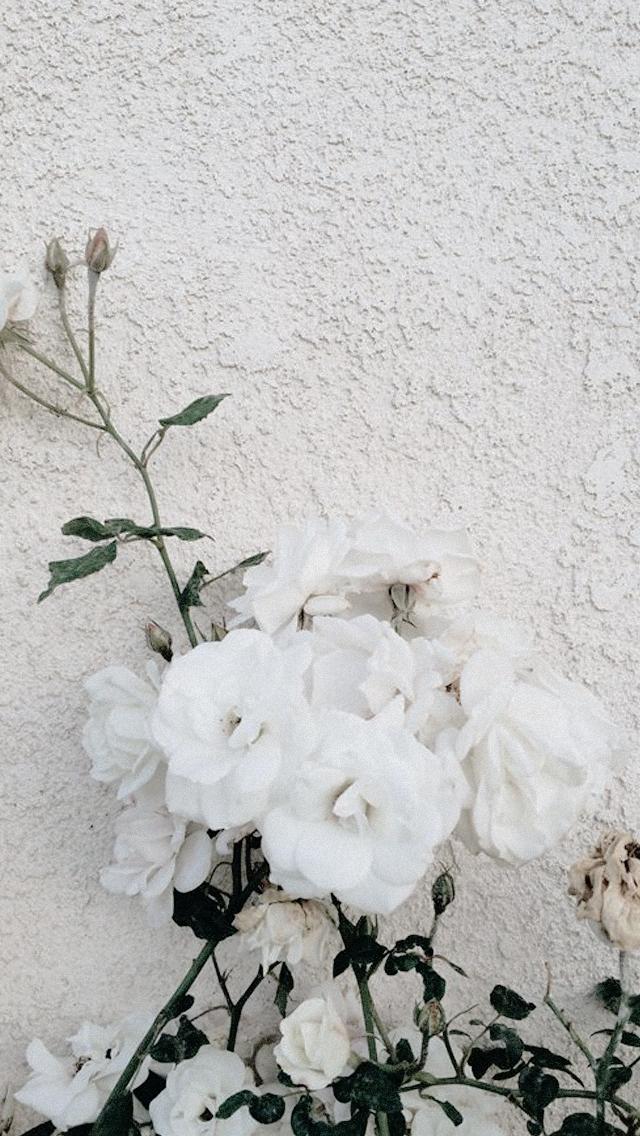 Download 5400 Wallpaper Hp Bunga Hd Terbaru Iphone Wallpaper Pography Po Frame Wallpaper Flower Aesthetic