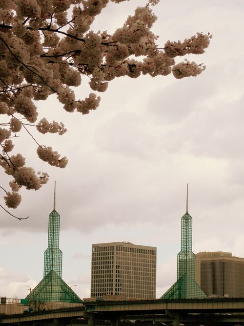 glass towers and cherry trees