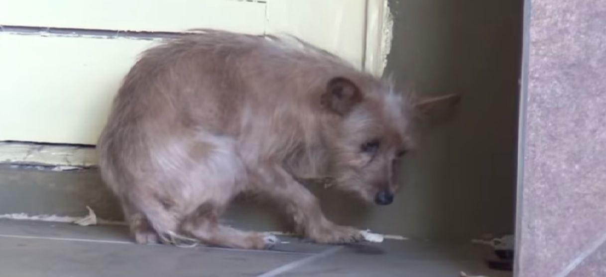 Hope For Paws Rescues Terrified Abandoned Dog Dogs Paws Rescue Dog Life