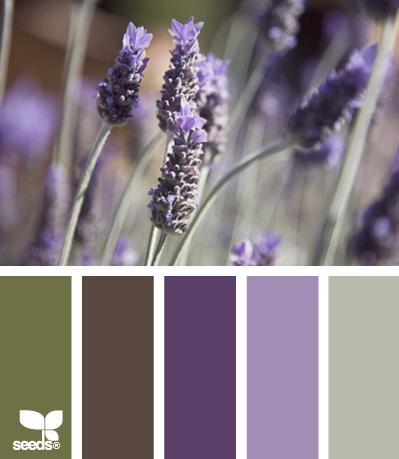 palette colori lavanda