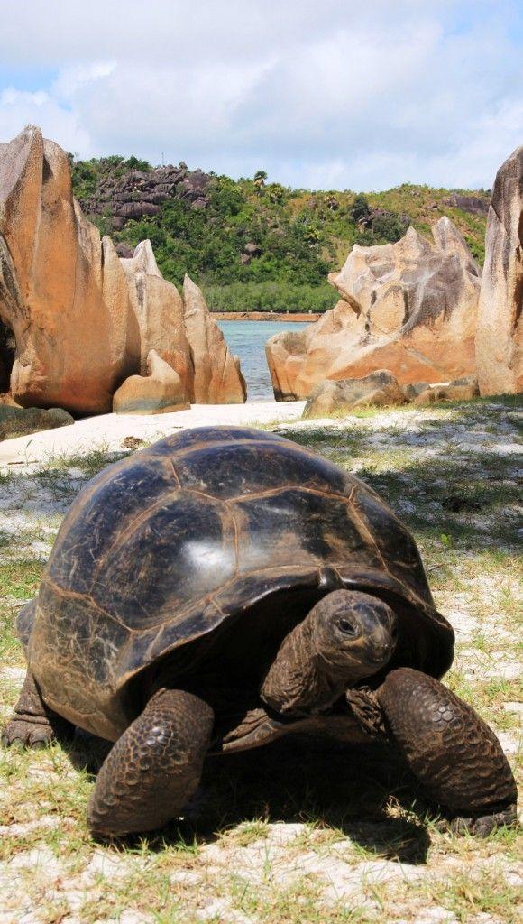 #Travel - Curieuse Island, Seychelles #justexplorers
