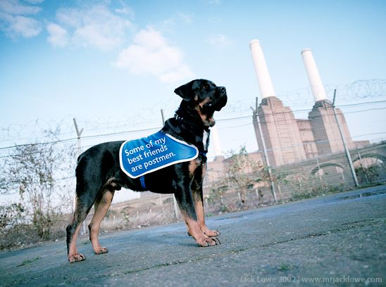 Battersea Dogs Home Ad Campaign Photography By Jack Lowe Battersea Dogs Home Battersea Dogs Dogs