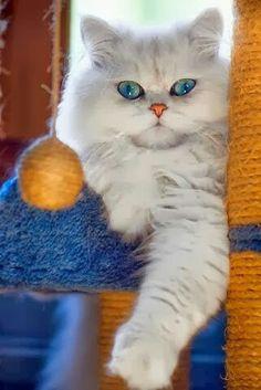Καλό Απόγευμα Καλό Απόγευμα Cute cats, Cute animals, Kittens
