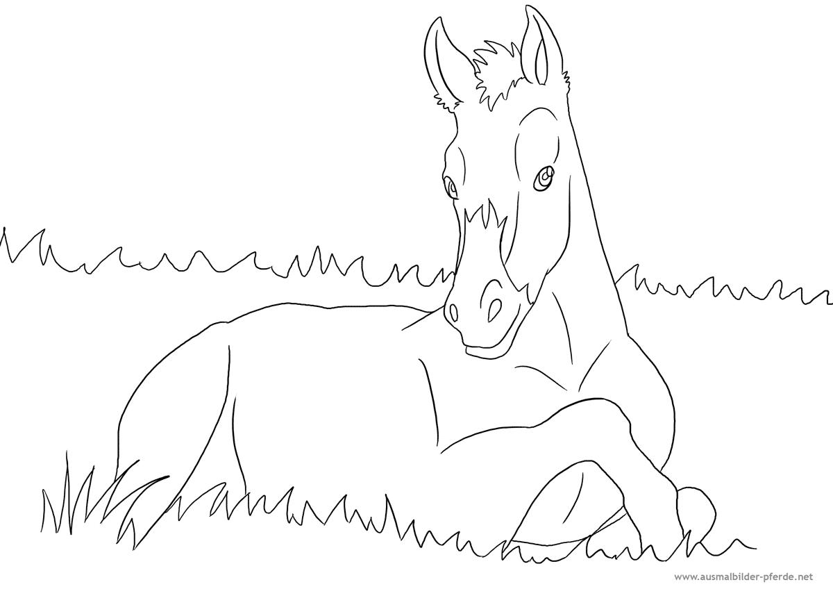 ausmalbild pferd 16 in 2020  ausmalbilder pferde