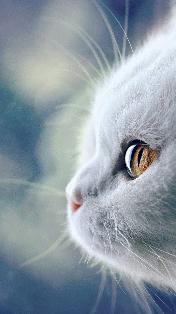 cats cute animals wallpaper gray (Görüntüler ile