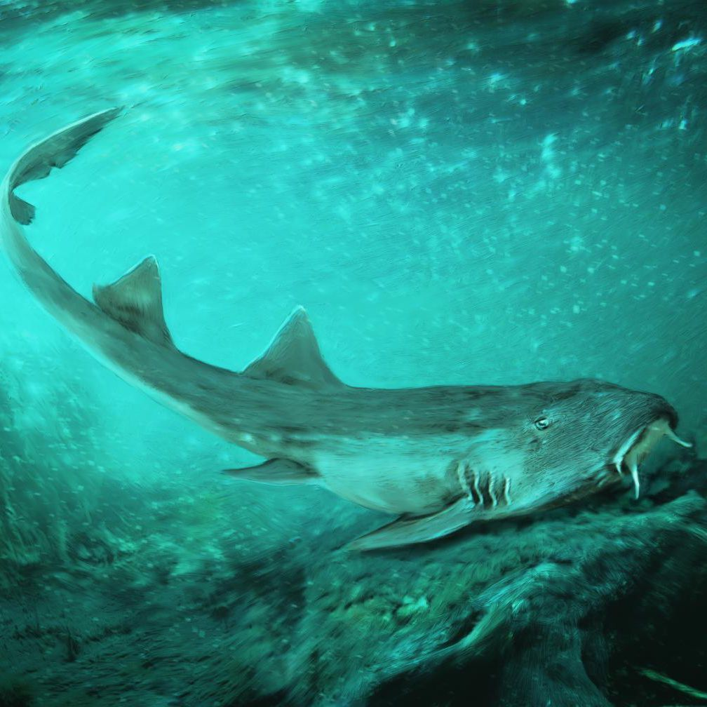 New Shark Species Found in the Mud, Right Next to Where