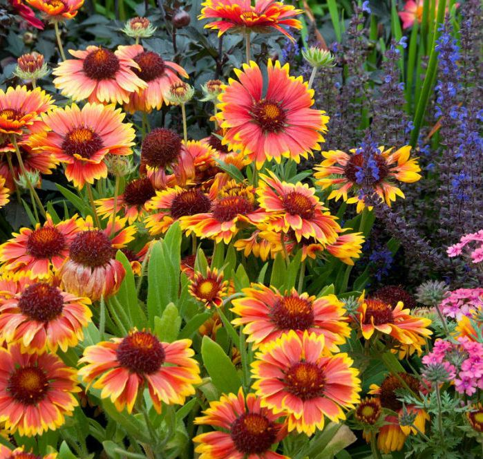 Landscaping Solutions For Sunny, Dry Areas Of Your Yard