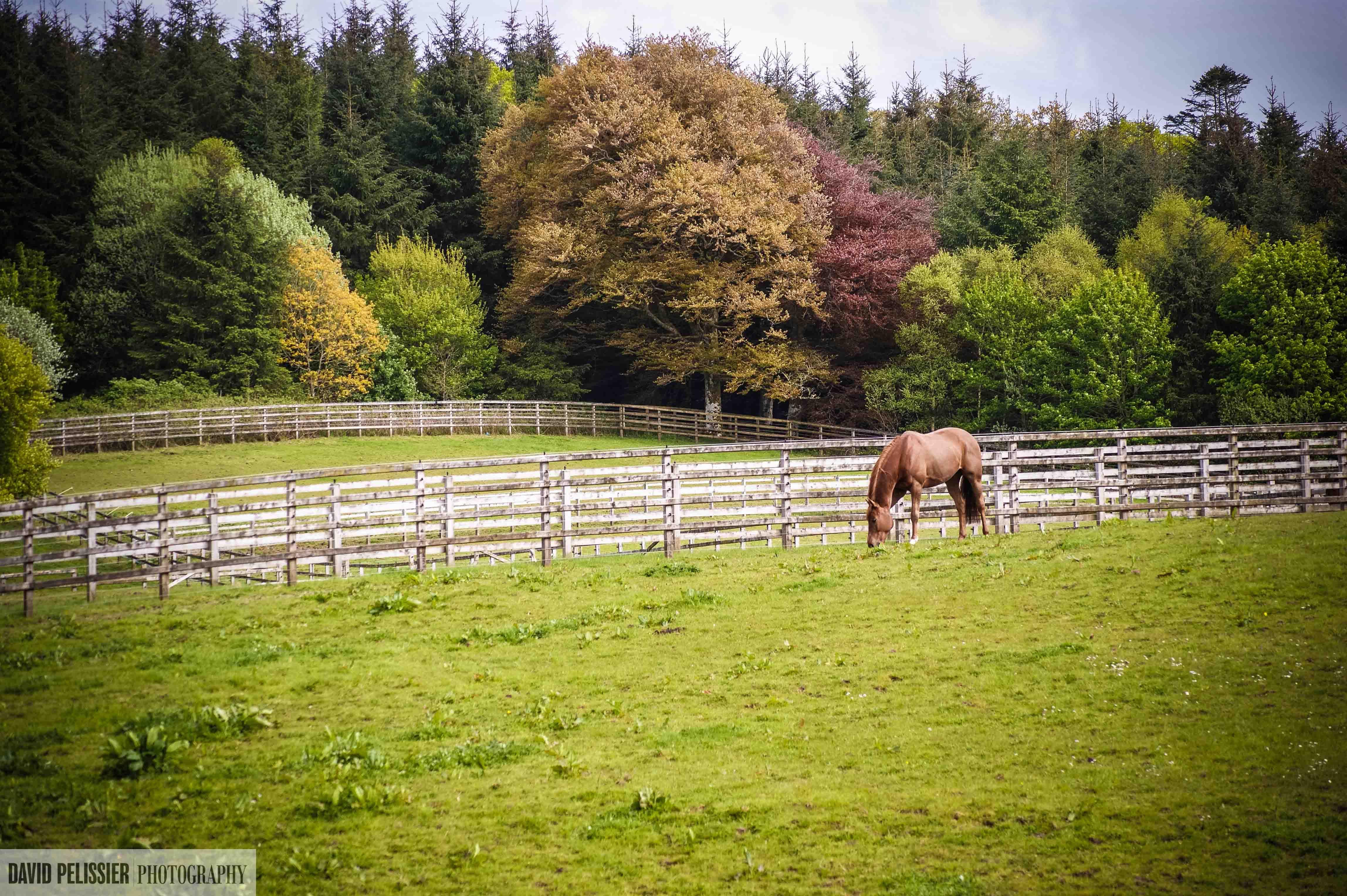 """Horse on Necarne castle grounds"" Horses, Irish ancestry"