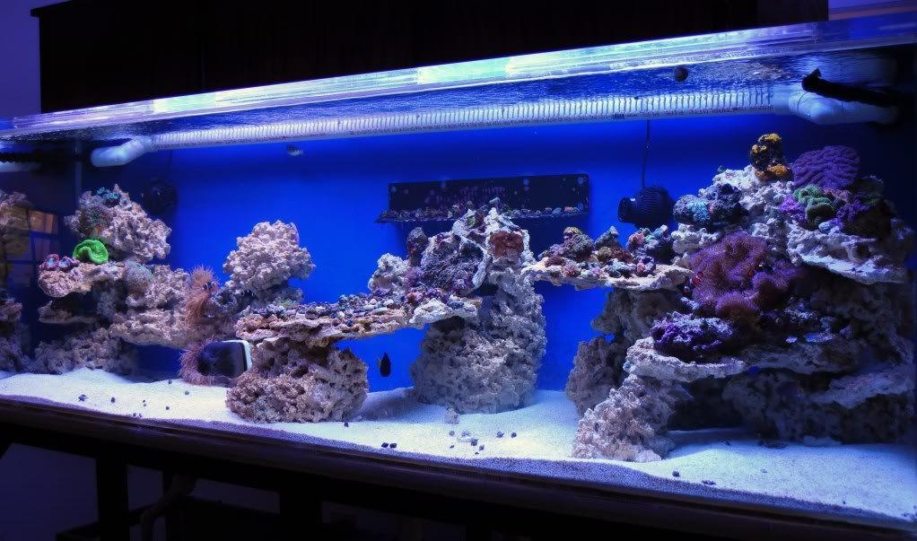 How To Drill Live Rock Reef Central Online Community Coral Aquarium Saltwater Aquarium Tanks Saltwater Aquarium Fish
