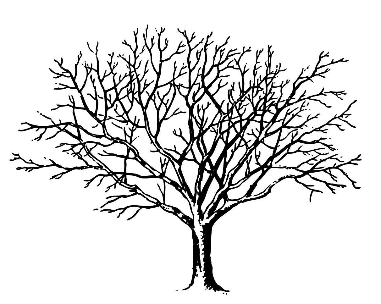 Дерево рисунок карандашом без листьев