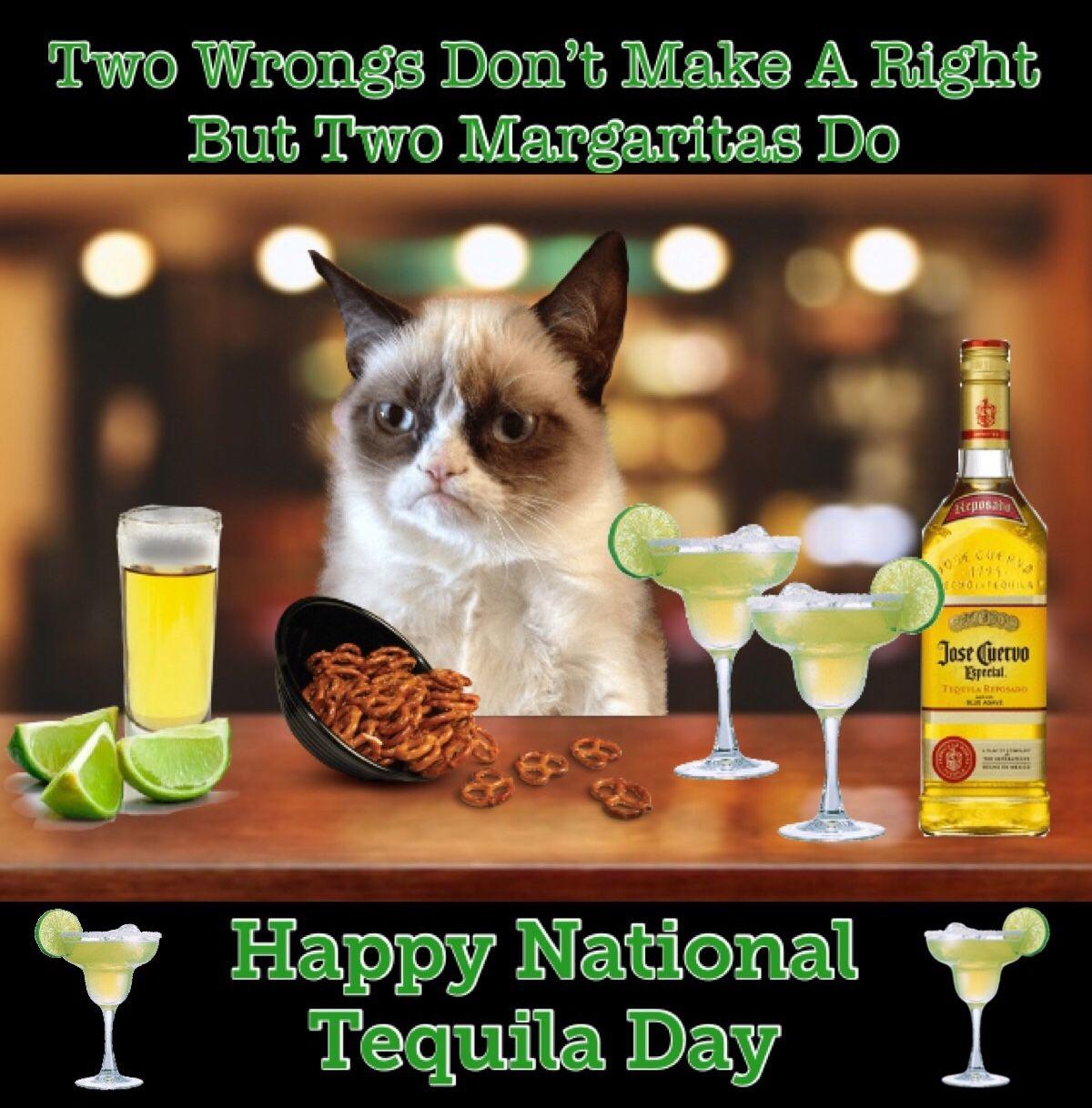 Grumpy Cat Is Celebrating National Tequila Day🍹 Grumpy
