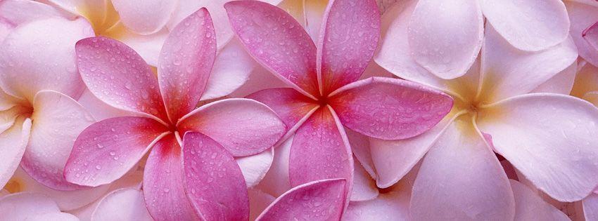 Pink Flowers Facebook Cover Couverture Facebook Pinterest
