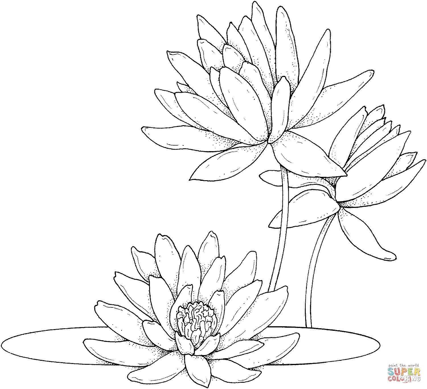 Left leaf (add more detail) and bottom waterlily? | Lilies ...