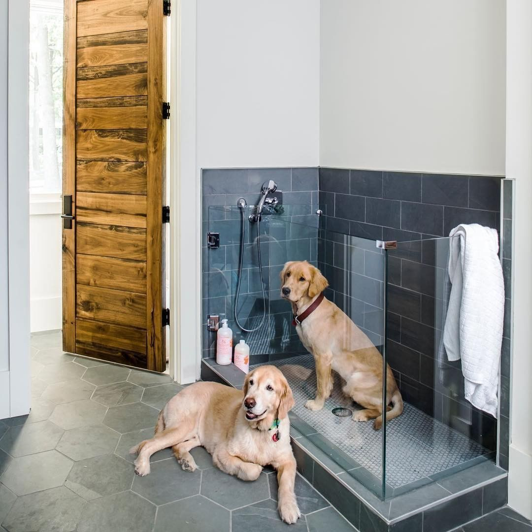 Dogs Have Their Own Showers Now And We Really Want One In Our