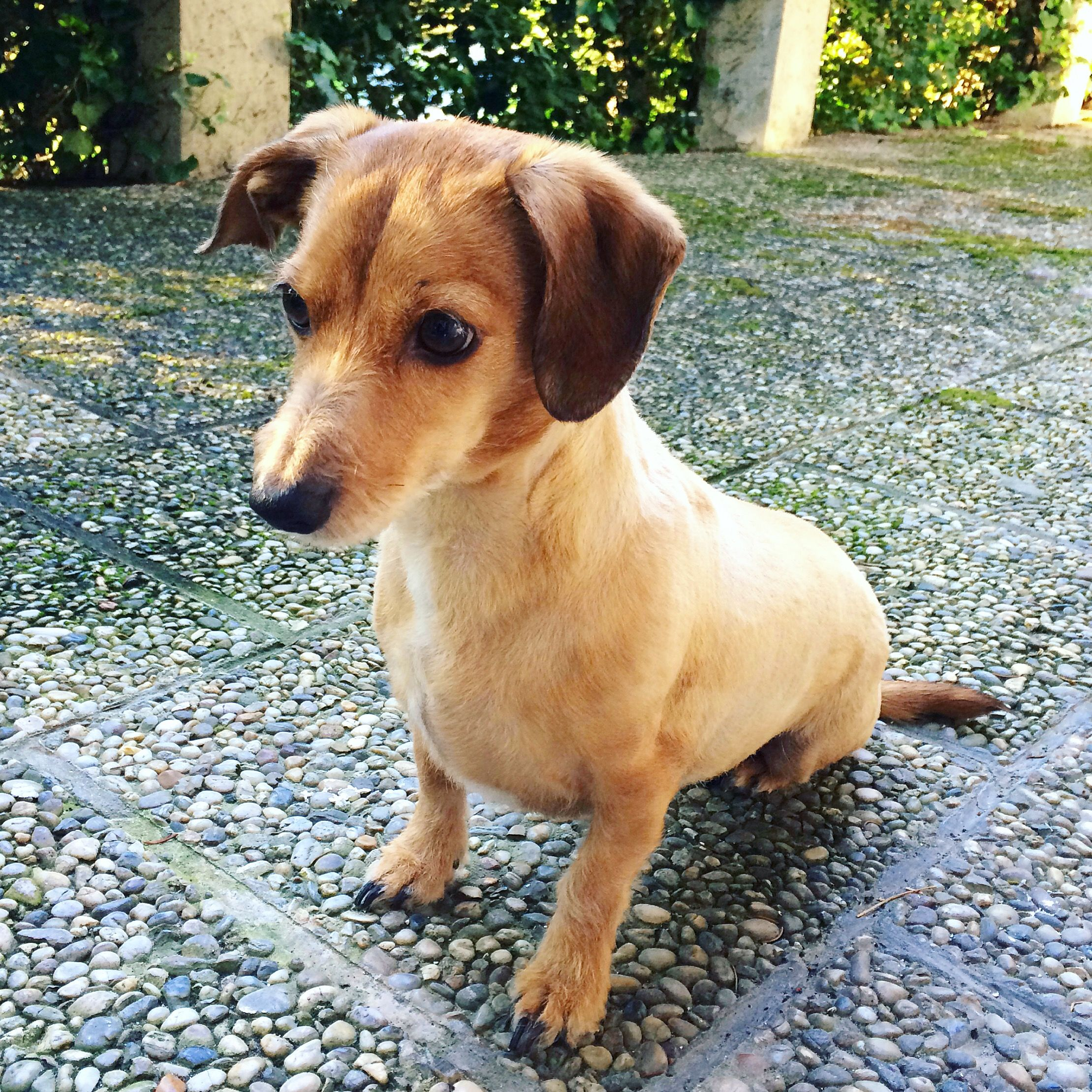 Pin Von Pawshake Osterreich Auf Pawshake Osterreich Hunde Lustige Hunde Hunde Bilder Hundebilder