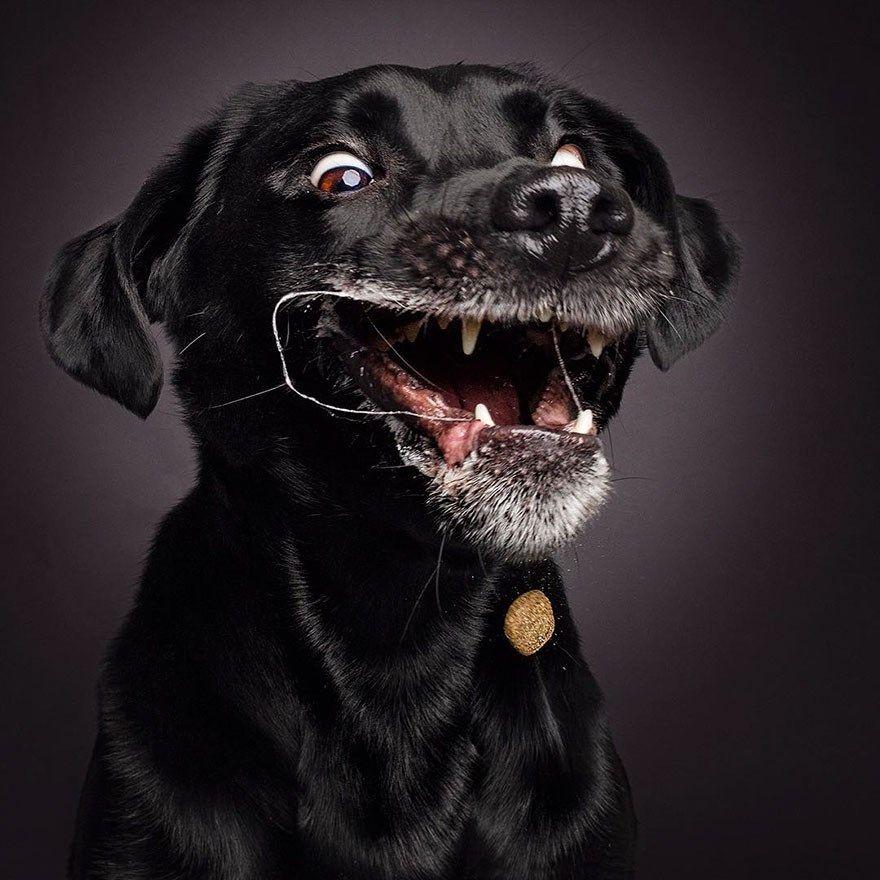 As caras que o seu cachorro faz quando você joga algo para ele pegar