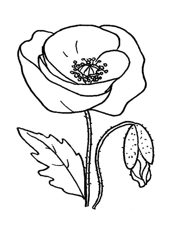 Red Poppy Picture Coloring Page Color Luna in 2020 (With