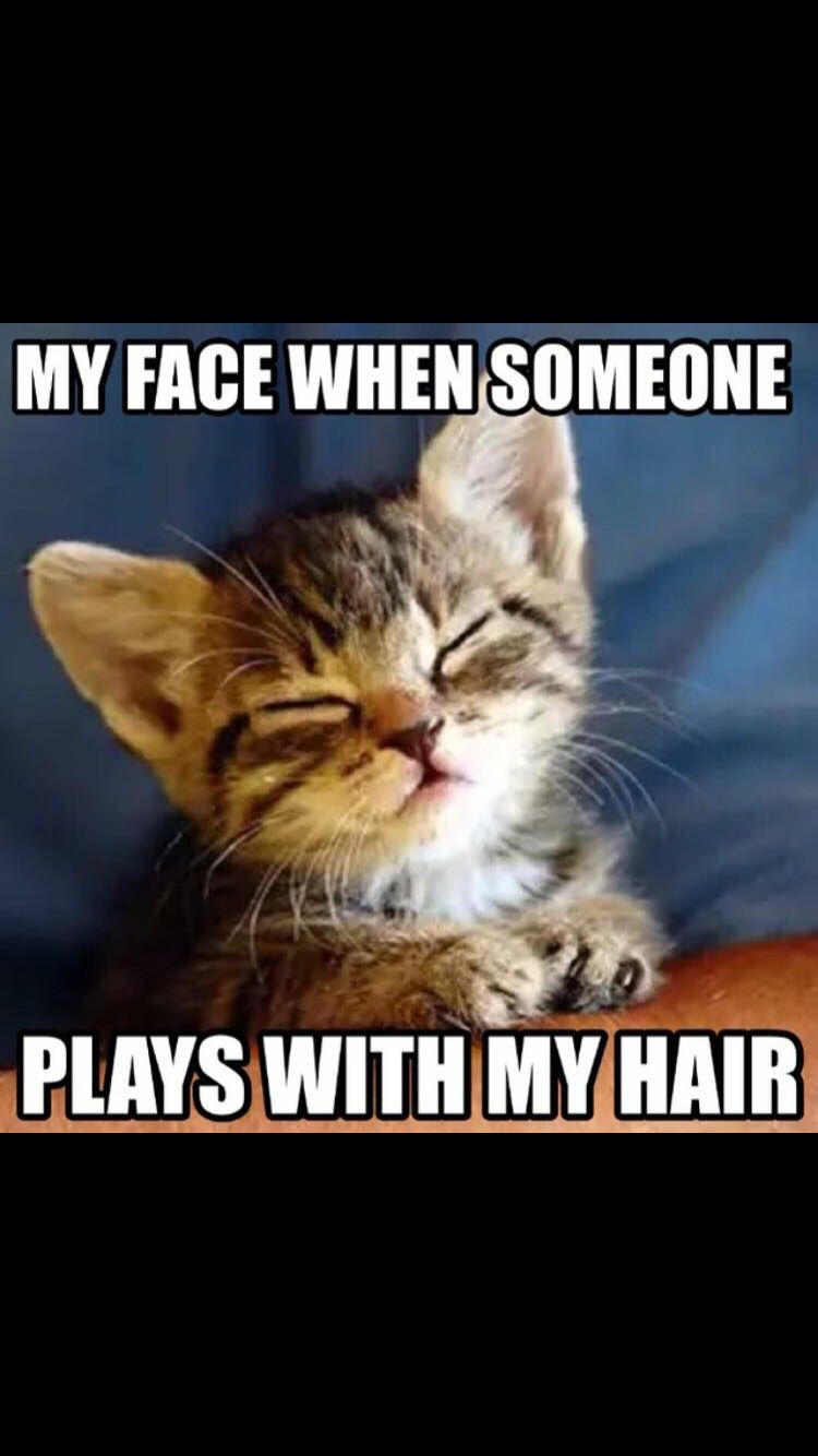 When Someone Plays With Your Hair Kittens Cutest Baby Cats Animals