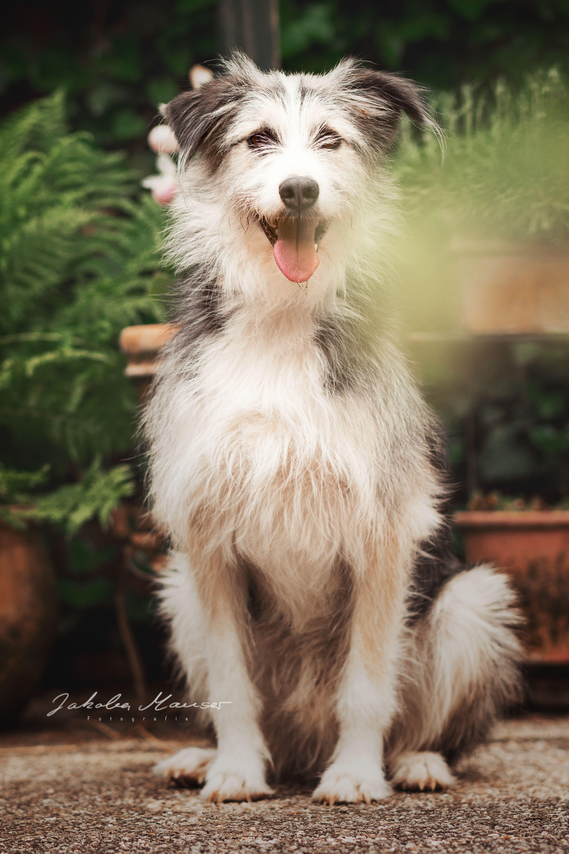 Hundeportrait Im Garten Tierfotografie Hund Portraits Tiere