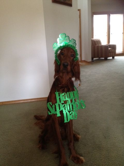 Molly's first st Patrick's day