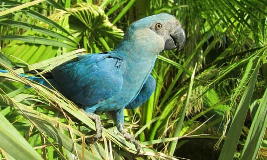 Eight Bird Species Are First Confirmed Avian Extinctions This Decade Bird Species Rare Animals Extinction