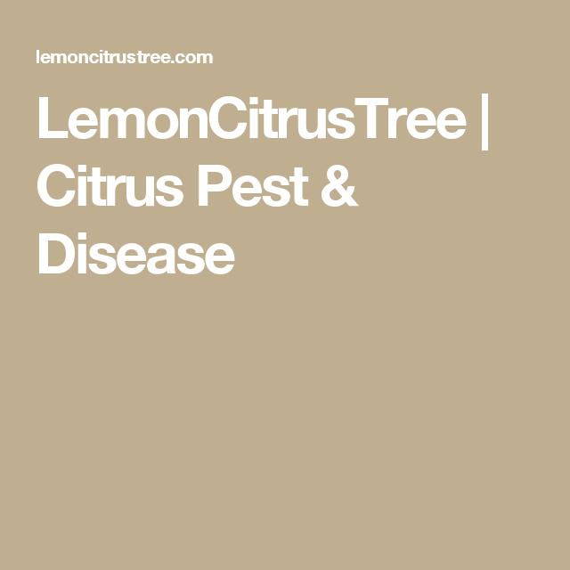 LemonCitrusTree   Citrus Pest & Disease