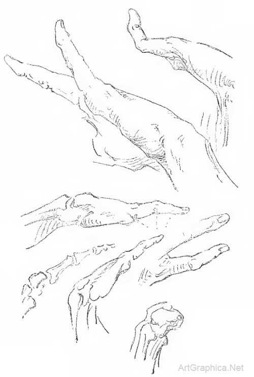 drawing the little finger | b777 | Pinterest | Anatomy, Book drawing ...