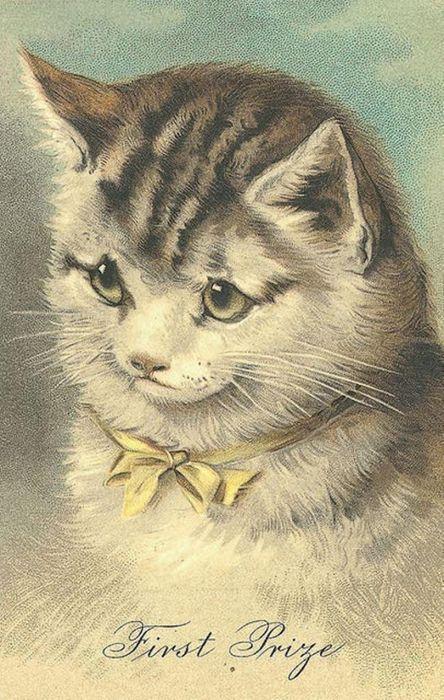 Днем, винтажные открытки кошки