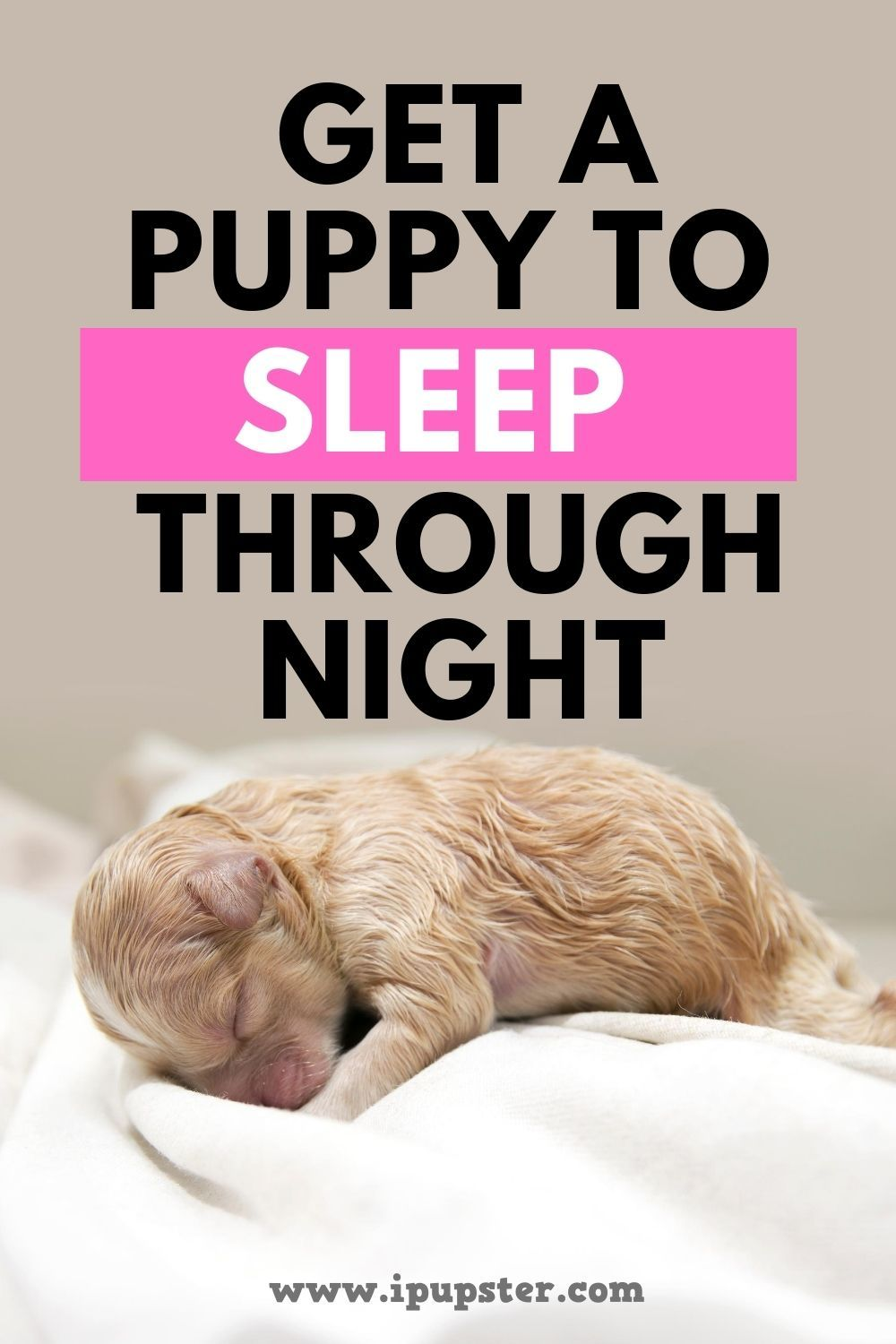 How To Get A Puppy To Sleep Through The Night In 2020 Sleeping Puppies Getting A Puppy Puppies