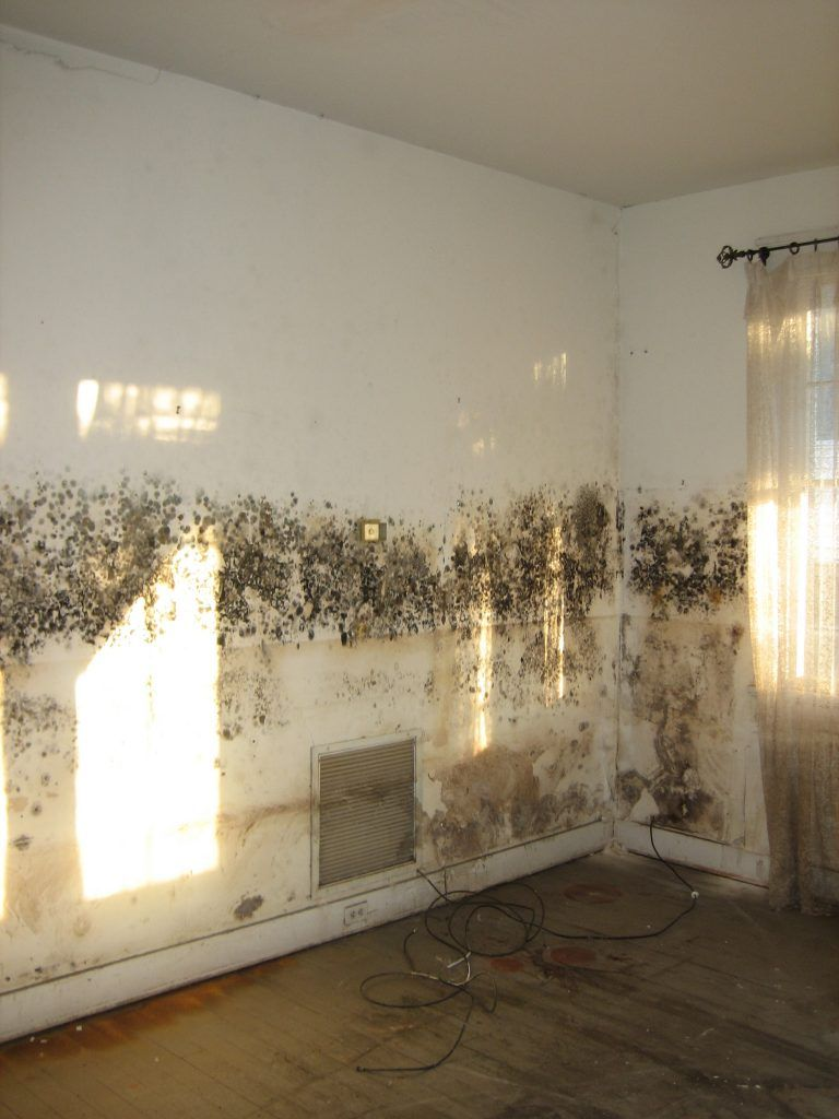 Moldy Living Room Mold Allergies Solutions Oh My