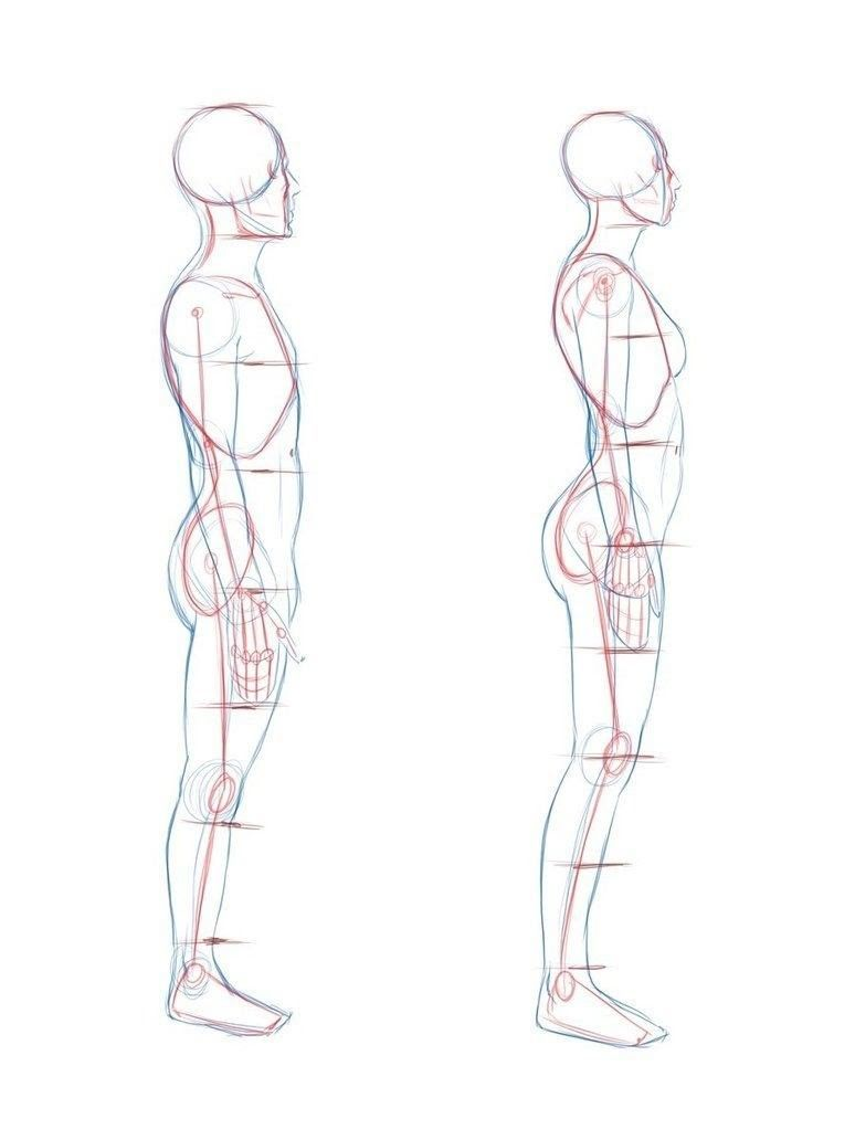 10 Staggering Drawing The Human Figure Ideas Body Reference Drawing Profile Drawing Human Figure Drawing Proportions are the first thing to learn when drawing bodies because they teach you how to be anatomically correct. human figure drawing